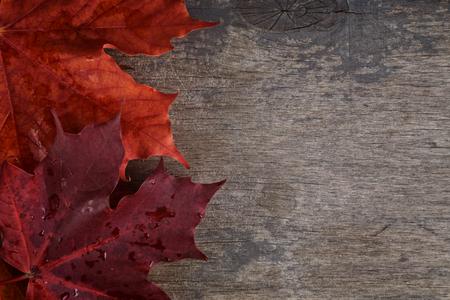 autumn maple leaves on wood surface, horizontal photo