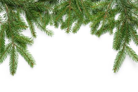 abeto: frontera de ramas de abeto con la sombra, en blanco
