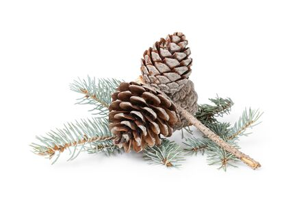 blue spruce twig with three cones, isolated on white background Stockfoto