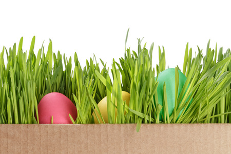 easter eggs hiden in grass border composition photo