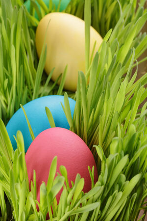 easter eggs hiden in grass, close up shot photo