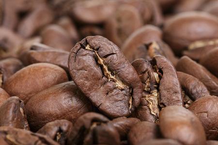 arabica: big arabica coffee beans