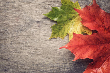 autumn maple leaves on wood table, fall season background photo