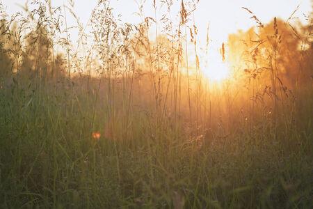 meadow  grass: close up prado de hierba en la luz del sol por la noche, vintage tonificado