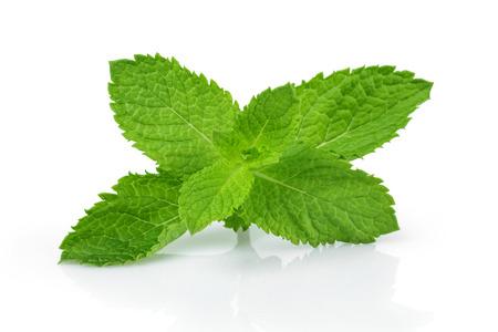 menta: hojas de menta fresca, aislados en fondo blanco Foto de archivo