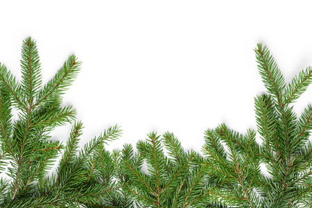 twigs: bottom border from fir twigs, christmas decoration white background