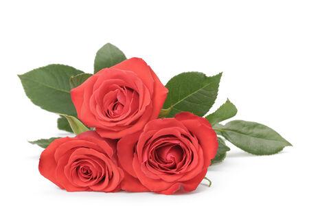 rosas rojas: tres rosas rojas frescas aisladas sobre fondo blanco