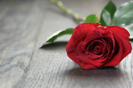 anniversary flower: One red rose on oak wood table, copy space for text