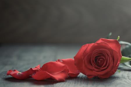 Rote Rose mit Blütenblättern auf Holztisch