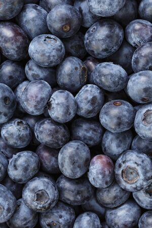 picked: Freshly picked organic blueberries, from above photo Stock Photo