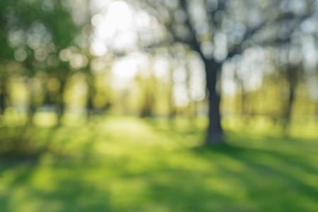 defocused Hintergrund Bokeh von Apfelgarten mit blühenden Bäumen im sonnigen Tag, Hintergrund