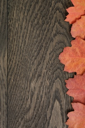 directly: vintage toned autumn oak leaves for background, directly from above