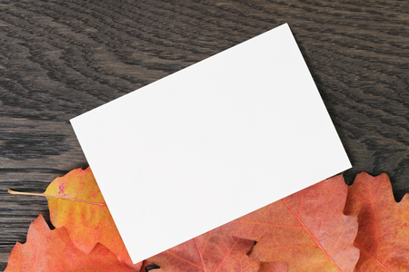 directly: vintage toned autumn oak leaves for background with paper card, directly from above
