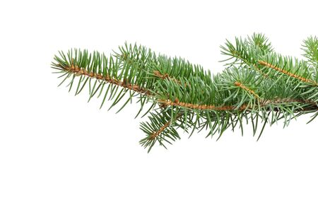 fir twig: green fir twig for hanging something isolated on a white background