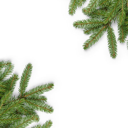 pine trees: fir branches border on white background, good for christmas backdrop Stock Photo