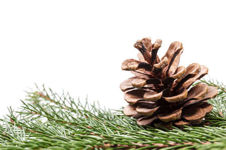 fir twig: fir twig with pine cone border composition, white background Stock Photo