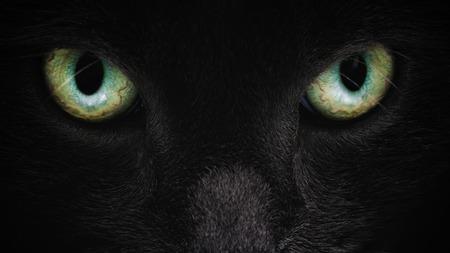 grey cat face closeup with green eyes, british cat