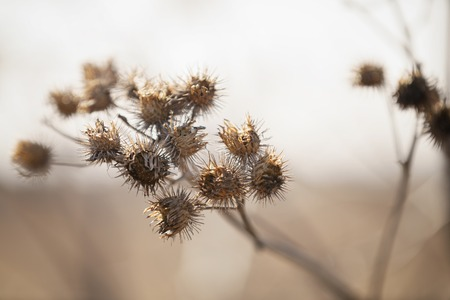 sere: dry bur grass on rural field in early spring, shallow focus Stock Photo