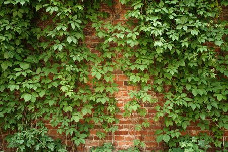 ivy league: red old brick wall with climbing plants, background photo