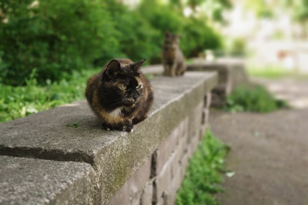 two homeless cats sitting on stone in summer park, selective focus Imagens