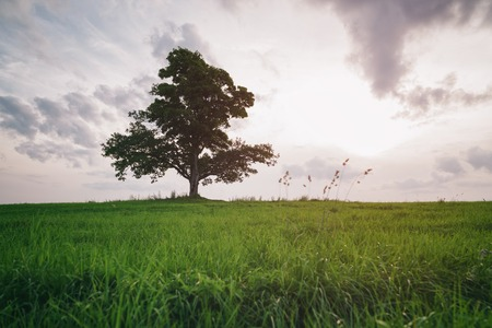 low angle: low angle view of oak and maple grow together on green field in sunset light Stock Photo