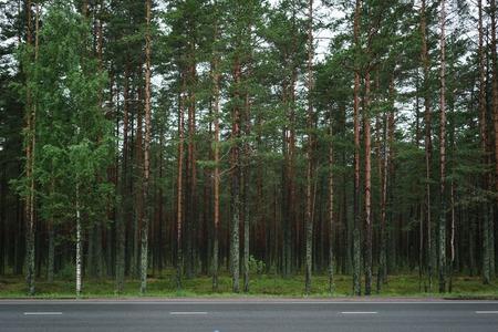 karelia: pine forest behind asphalt road in Karelia, misty morning