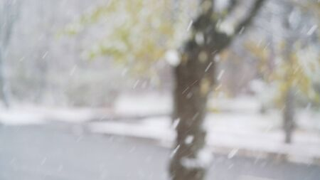 slow motion: snow falling in slow motion with blurred trees on background, 4k photo