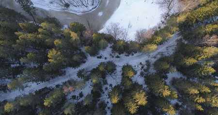 straight faced: camera looking straight down over winter fir forest in sunset, 4k drone photo
