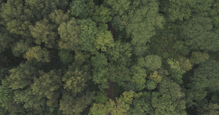 Aerial shot fly over wild park or forest in cloudy day