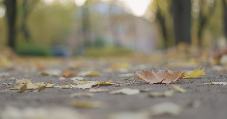 Low angle shot of fallen autumn leaves in city in the morning with moving cars on background