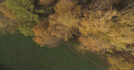 Aerial top view over field and autumn forest in the morning