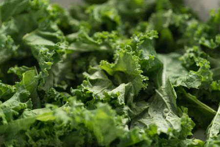 kale salad leaves in white bowl closeup, shallow focus Imagens