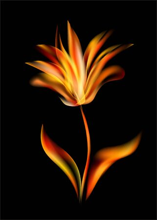 open flame: Flower of tulip disclosed flames rose flowers opening