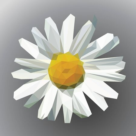 flower petals: polygonal open flower with petals daisy on gray Stock Photo