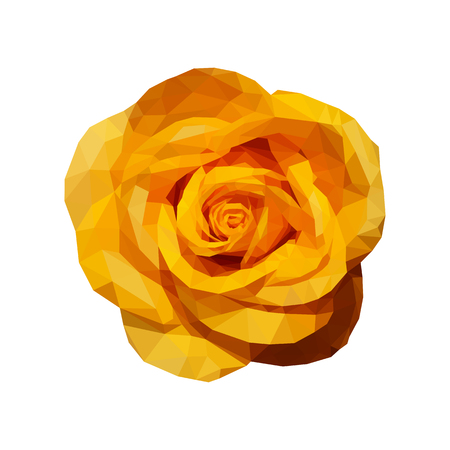 yellow rose: polygonal yellow rose top view completely open