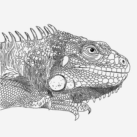 iguana drawn vector line monochrome on white background.