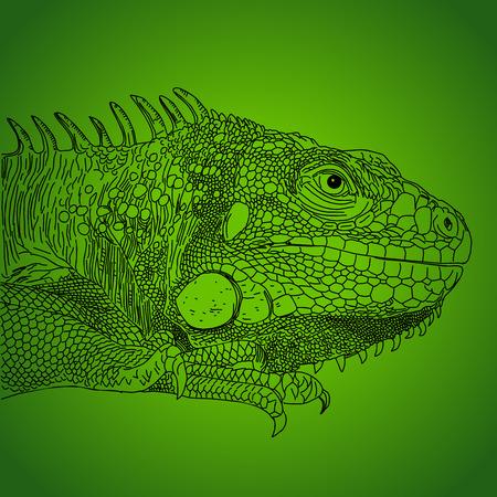 Iguana hand drawn vector illustration on green background