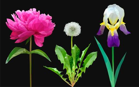 set of flowers dandelion peony and iris on black Çizim