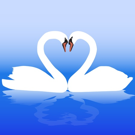 Two white swans with love. Vector