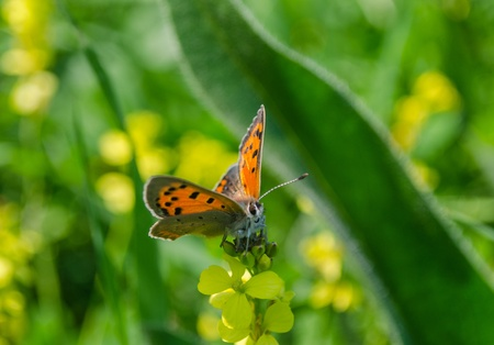 Orange butterfly on the grass  Spring