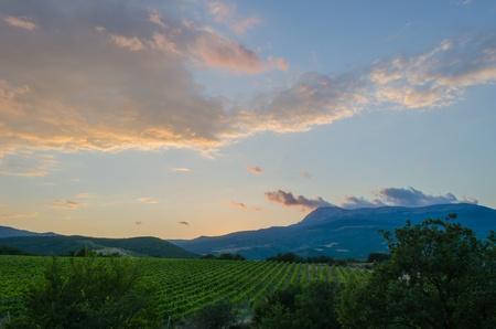 Panorama of vineyards on the sunset  Crimea , Alushta