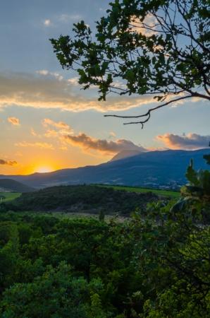 crimea: Panorama of vineyards on the sunset  Crimea , Alushta