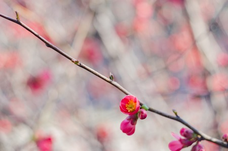 Blossom tree over nature background. Spring flowers.Spring Background