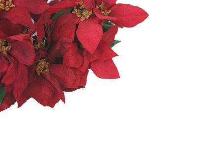 red poinsettias on white background with copy space Stock Photo