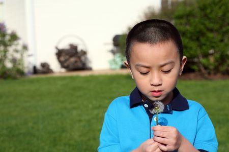 cute Asian boy looking at seeded dandelion
