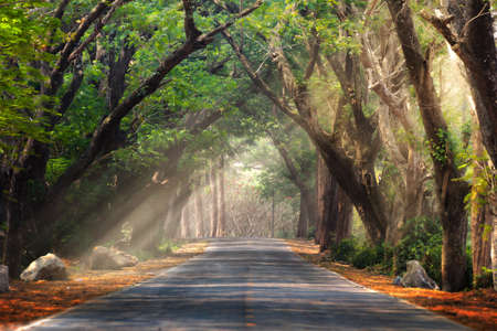 Abstract background of route and journey amidst the big tree and beautiful nature Stockfoto