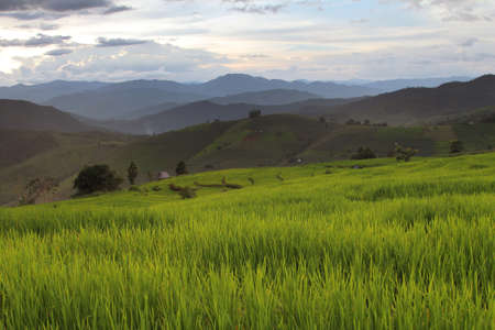 chaingmai: Beautiful landscape with colorful, light and shadow during sunset of the rice terraces(paddy field) and mountains at Mae-Jam Village , Chaingmai Province in Thailand Stock Photo