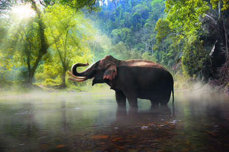 dark jungle green: Wild elephant in the beautiful forest at Kanchanaburi province in Thailand, (with clipping path)