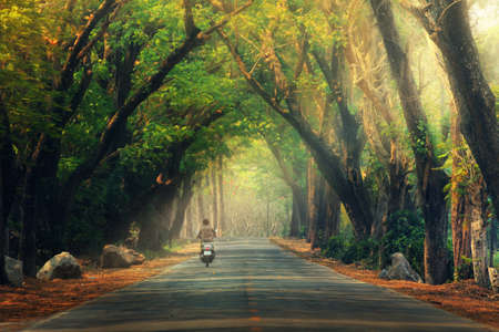 Abstract background of route and journey amidst the big tree and beautiful nature Stock Photo