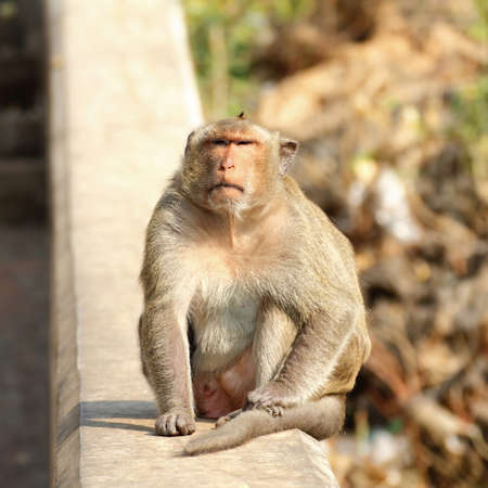 Monkey sit on his way up Tham Khao Luang at Petchaburi in Thailand. Stock Photo